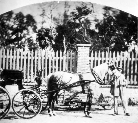 Le cocher de M. DELONDRE ainsi que le cheval Misti avec lequel il eut l'accident